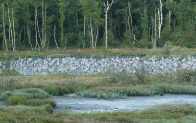 Prawie połowa Powiatu Iławskiego to obszary chronione, m.in. rezerwaty i parki krajobrazowe, użytki ekologiczne